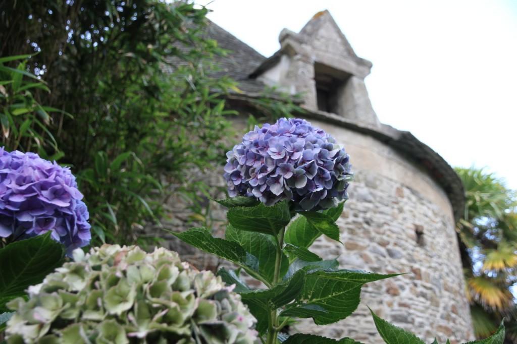 Höchst romantisch: Hortensie an Schloss.