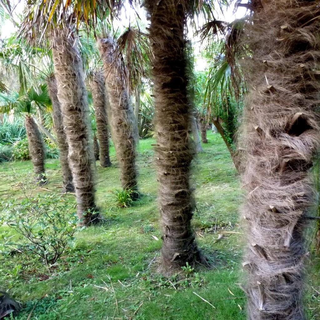 Ja, ein Palmenwald. Ja, hat etwas Absurdes, besonders in der Normandie.